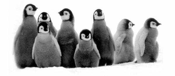 Cute-Penguin